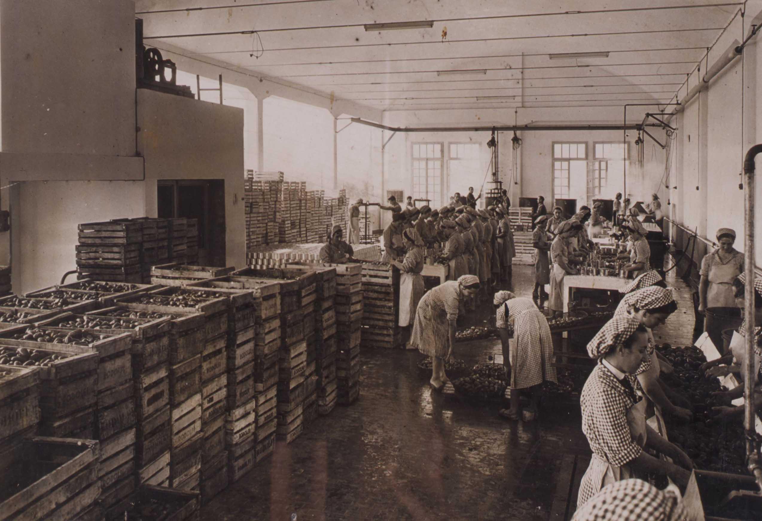 Stabilimento Rodolfi mansueto: lavaggio e cernita negli anni Sessanta del Novecento