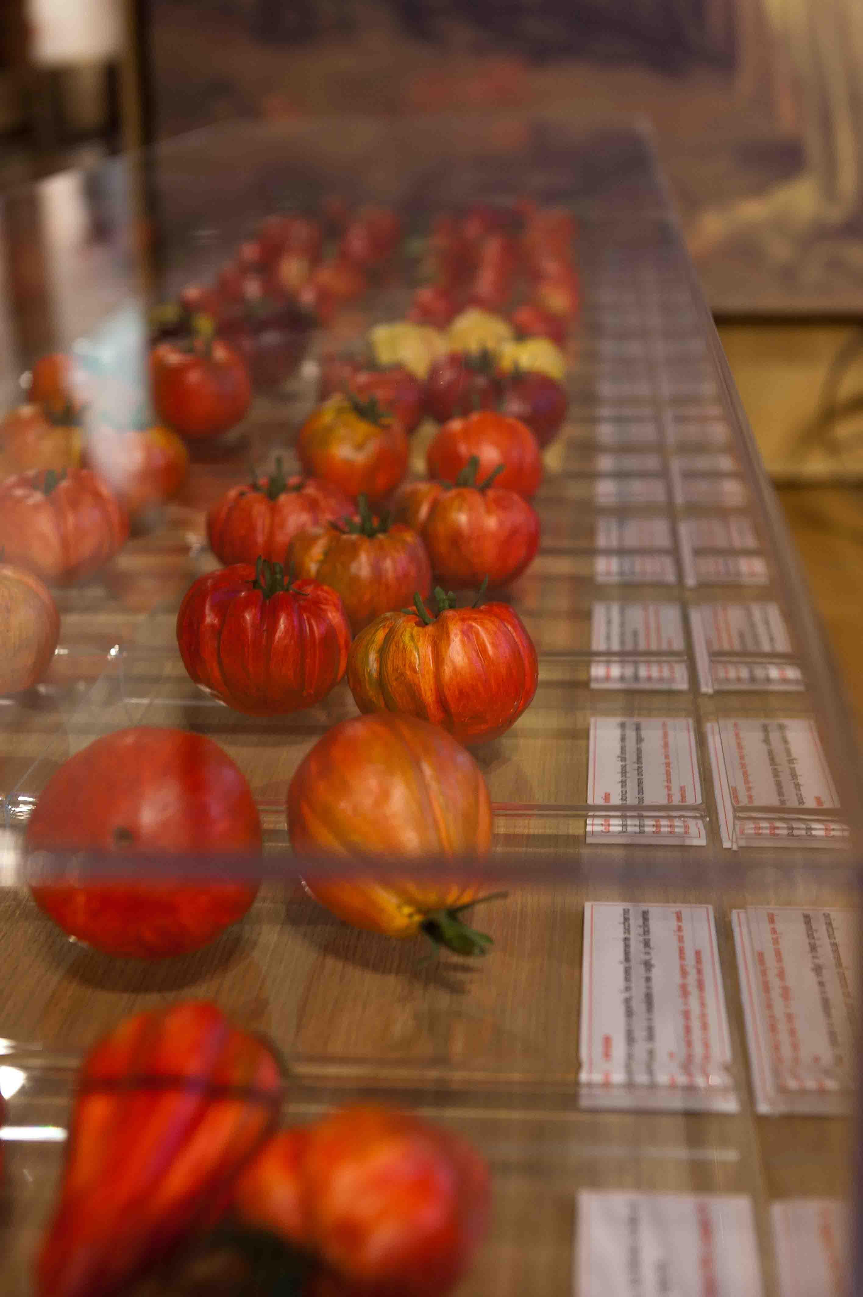 Museo del Pomodoro - Le varietà di pomodoro (foto Luca Rossi)